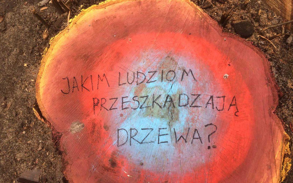 #lexszyszko @michal.frydrych maluje pnie ściętych drzew. Podobno to nie prawo jest złe ale ludzie... Fot. Krzysztof Skłodowski