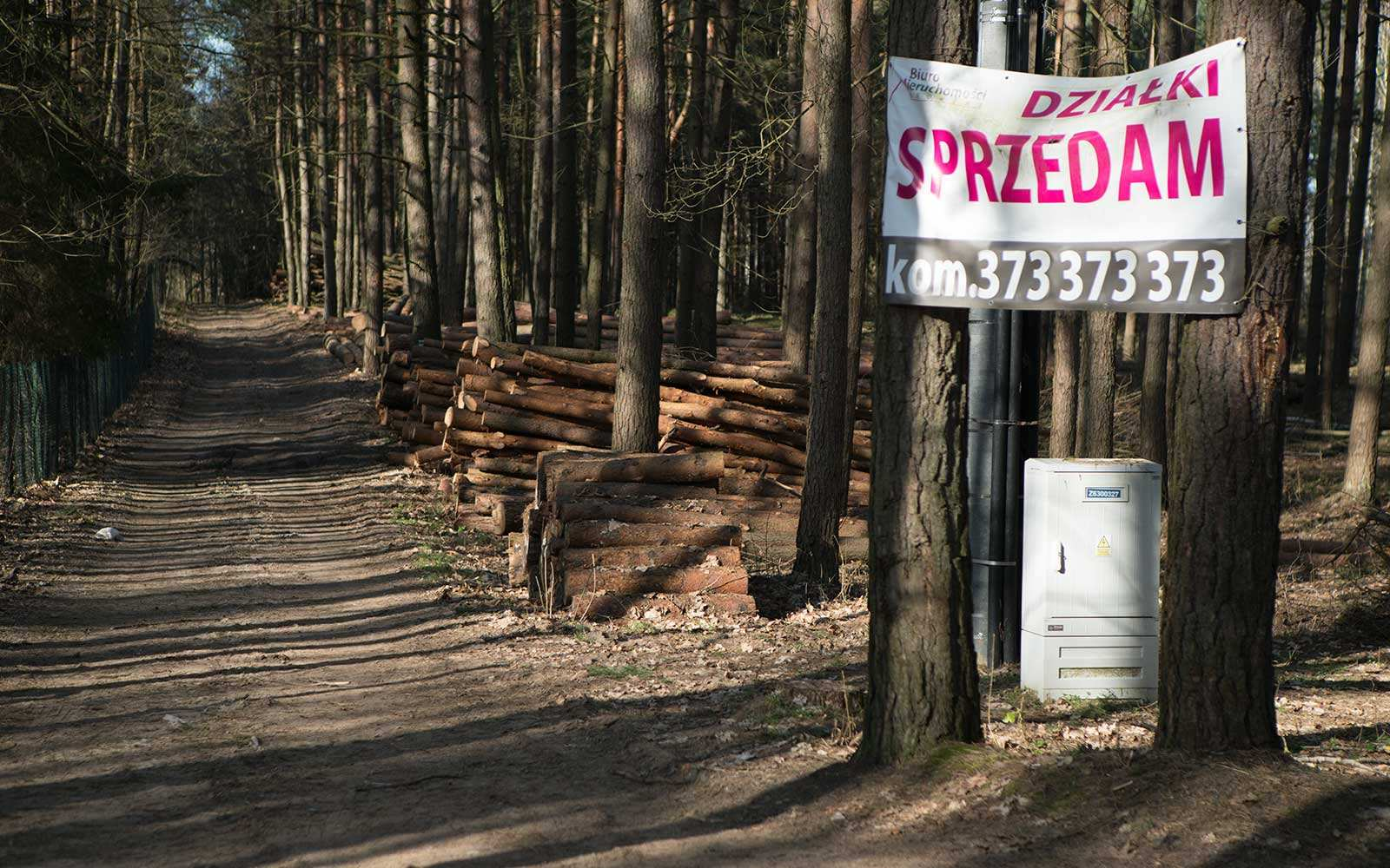Działki leśne na sprzedaż Fot. Krzysztof Skłodowski