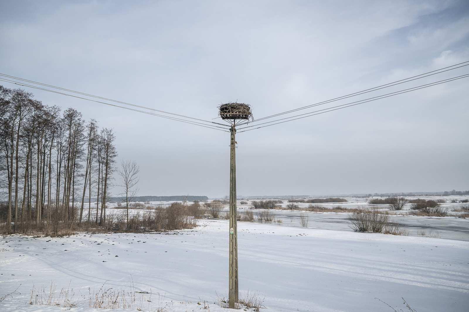 Ujście Biebrzy do Narwi, na pierwszym planie bocianie gniazdo na słupie. Fot. Krzysztof Skłodowski