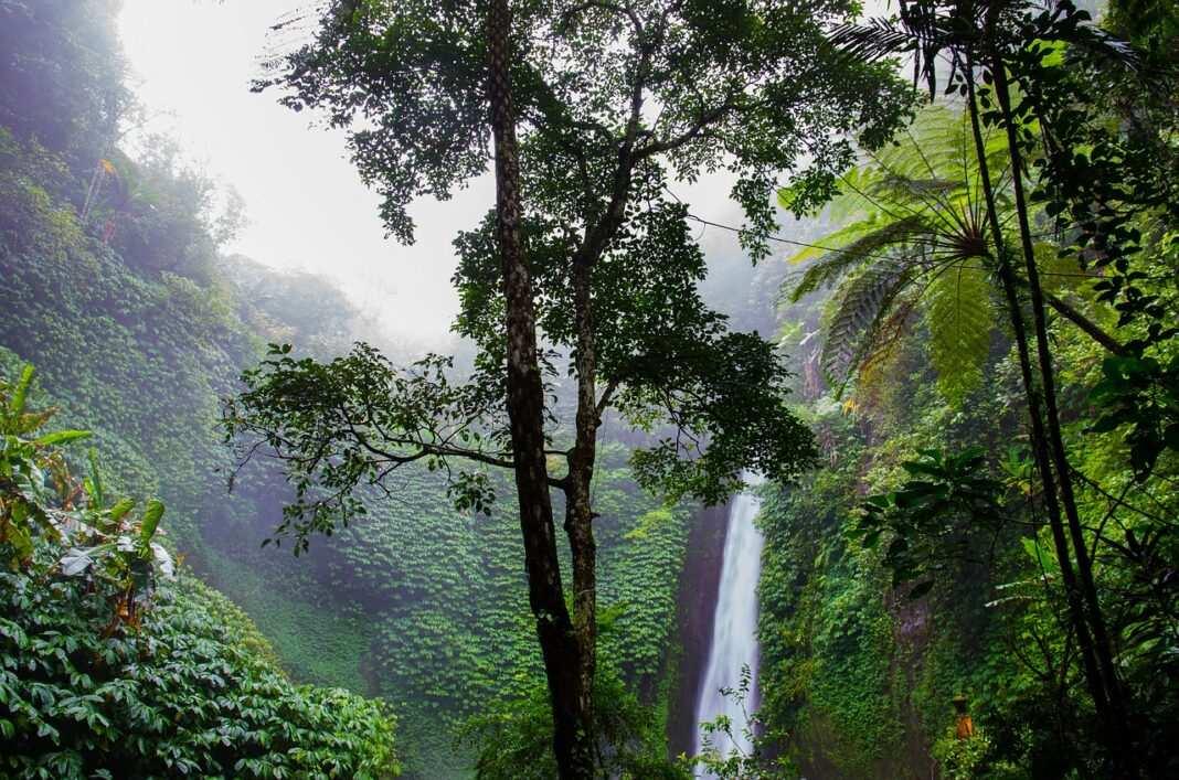las, tropiki, wodospad