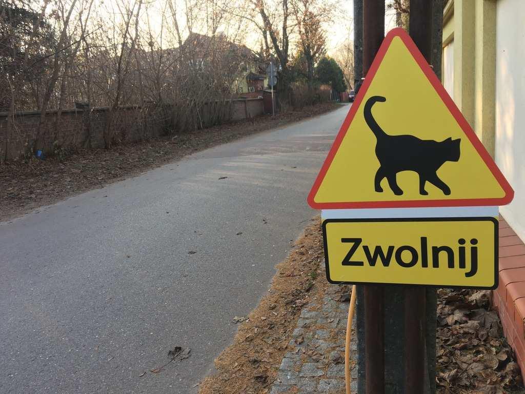 znak drogowy z kotem