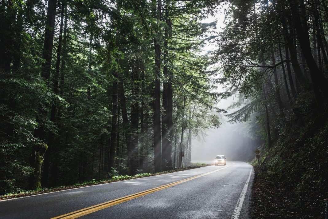 Samochód na drodze w lesie