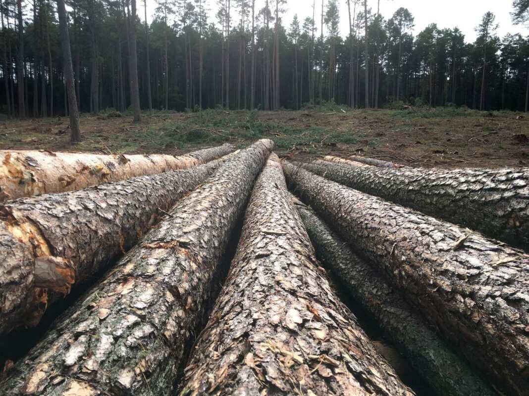 Las drzewa warmińskie